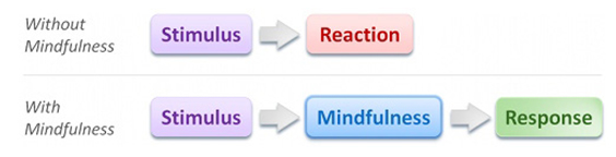 stimulus > reaction